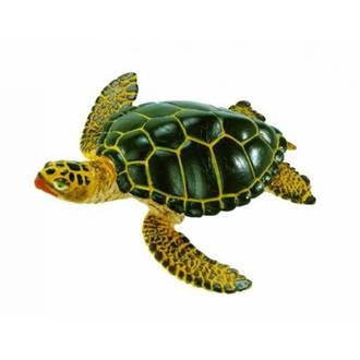 Safari - Green Sea Turtle