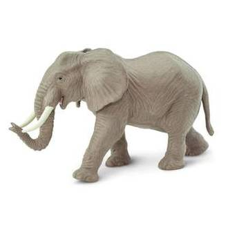 Safari - African Elephant 270029