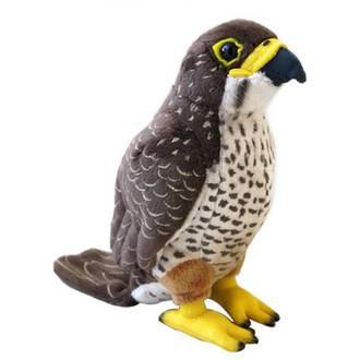 Sound Bird New Zealand Falcon (karearea)