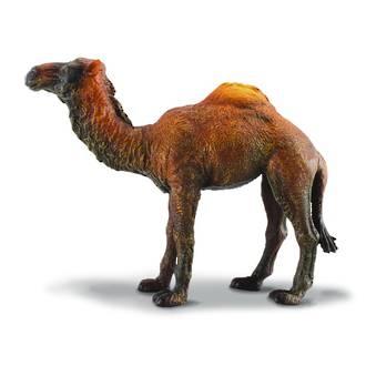 Collecta - Dromedary Camel