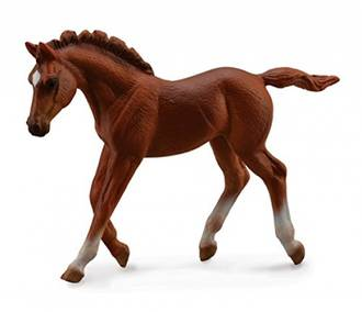 Collecta - Thoroughbred Foal Walking Chestnut