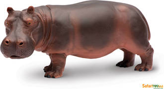 Safari - Hippopotamus