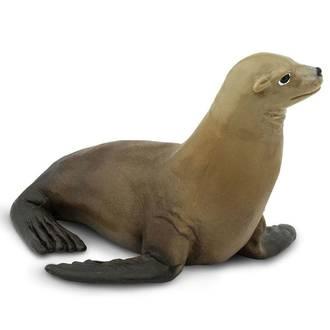Safari - Sea Lion