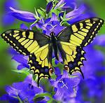 Diamond Art Butterfly