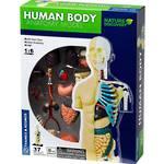 Nature Discovery Human Body Anatomy Model