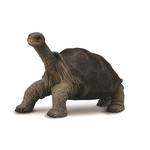 CollectA Pinta Island Tortoise
