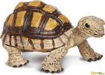 Safari - Tortoise