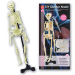 DIY Skeleton Model