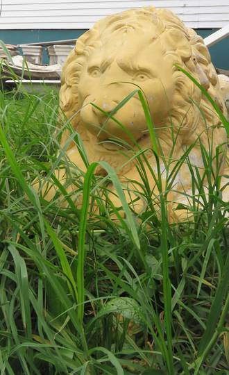 Life Size Cement Lion Statue. Can be used as a Water Feature. $1500.00