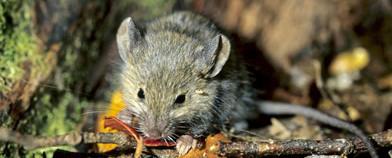 Rodent Control Wellington